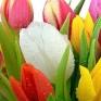 Сеть магазинов «Планета цветов»