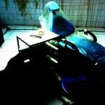 Квесты в реальности «Quarantine»