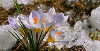 Поздравляем с первым месяцем весны и наступающим Женским Днем 8 марта!